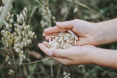 【糖質制限でやせられる?】 穀物について知ろう